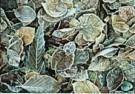 Jeanne Weijl  -  Frozen Autumn - Postkaart -  C8141-1