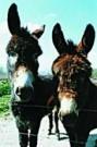 Loes Schleedoorn  -  Harrie&Hannie - Postkaart -  C8157-1