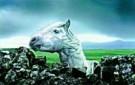 Bob Eshuis  -  Paard - Postkaart -  C8221-1