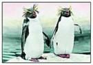 Hans Kahr  -  Zoology 6 - Postkaart -  C8738-1