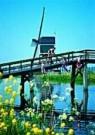 Igno Cuypers  -  Springtime Jumb - Postkaart -  C8938-1