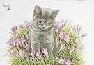 Francien van Westering (1951)  -  Grijs kitten in krokussen - Postkaart -  C8990-1