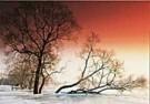 Paul van Gaalen(1948)  -  bevroren uiterwaa - Postkaart -  C9245-1