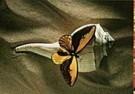 Paul Huf (1924-2002)  -  Naturalis, 1993 - Postkaart -  C9332-1