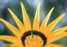 Girma Debebe  -  Sunshine - Postkaart -  C9442-1