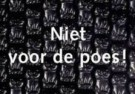 Paul Baars (1949)  -  Niet voor de poes - Postkaart -  C9529-1