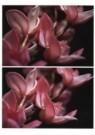 Thomas Florschuetz (1957)  -  O.T. (Orchideeen) - Postkaart -  C9663-1