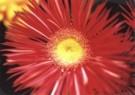Alette Berends  -  Het gele hartje - Postkaart -  C9742-1