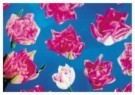 -  Tulpen op blauw - Postkaart -  C9903-1