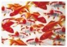 De Kunstfabriek,  -  Goudvissen - Postkaart -  C9905-1