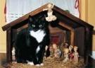 Ellen van de Woestijne  -  Sjonnie in de kerststal - Postkaart -  D1142-1