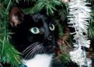 Lana Hogenstijn  -  De kat uit de boom kijken, 2008 - Postkaart -  D1143-1
