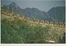 Paco del Gado  -  Del Gado / Great Wall Walk / Boot leeglopen - Postkaart -  F1876-1