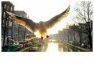 Gerard Schoone  -  Seagulls in the Red-Light-District, Amsterdam #2 - Postkaart -  GS002-1