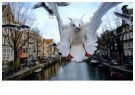 Gerard Schoone  -  Seagulls in the Red-Light-District, Amsterdam #3 - Postkaart -  GS003-1