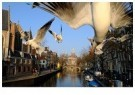 Gerard Schoone  -  Seagulls in the Red-Light-District, Amsterdam #5 - Postkaart -  GS005-1