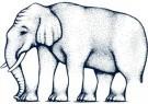 Paul Baars (1949)  -  Impossible figures.Elephant legs,by Robert Shepard - Postkaart -  PB0121-1