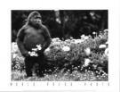 Leigh Henningham  -  Melbourne's Mzuri - Postkaart -  PS343-1