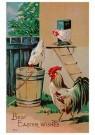 Anonymus  -  Drie kippen - Wenskaarten-set -  Q1C2383-1