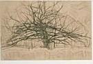 Piet Mondriaan (1872-1944)  -  Boom II - Postkaart -  QA015-1