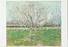 Vincent van Gogh (1853-1890)  -  van Gogh/ Orchards Plumtrees - Postkaart -  QA085-1