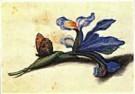 Margaretha de Heer (1603-1665) -  Heer,de /Studieblad met iris - Postkaart -  QA150-1