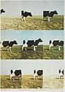 Jan Cremer (1940)  -  Cremer/CINC/Dutch landscape. - Postkaart -  QA172-1