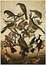 Anoniem,  -  Anonymous/Birds./NGW - Postkaart -  QA209-1
