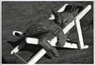 Sipa Press,  -  Sipa Press/ Cat in sunshine - Postkaart -  QB028-1