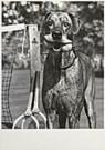 John Drysdale  -  Drysdale/Suns./Dog game tennis - Postkaart -  QB066-1