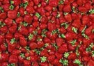 Letizia Volpi  -  Strawberries - Postkaart -  QC158-1