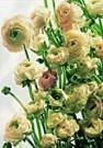 Paul Huf (1924-2002)  -  Flower power nr.69 - Postkaart -  QC314-1