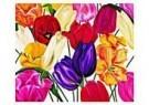 Marianne Furrer  -  A mania for tulipsIII - Postkaart -  QC349-1