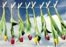 Martie Seesing  -  Knijpers met bloemen aan de waslijn, 2000 - Postkaart -  QC438-1