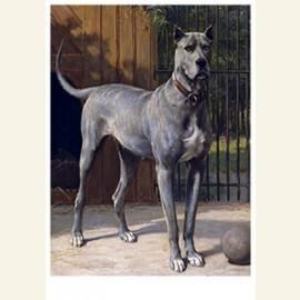 Blauwe dog, 1893