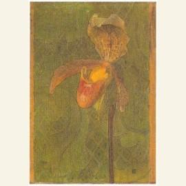 Orchidee, ca. 1894