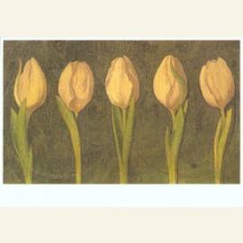 Vijf witte tulpen