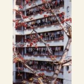 Xiada (fruit tree), Xiamen, 2002