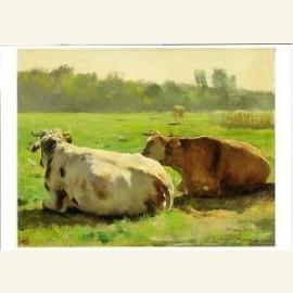 Koeien in een weide