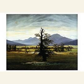 Landschap met eenzame boom