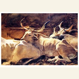 Oxen In Repose