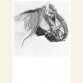 Paardenkop, 1916