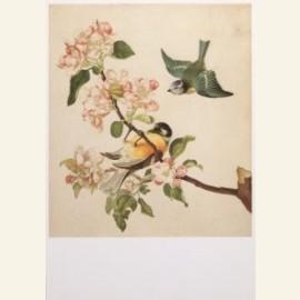 Twee vogels bij een tak appelbloesem