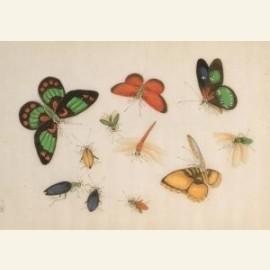 Vlinders, uit album met Chinese schilderingen