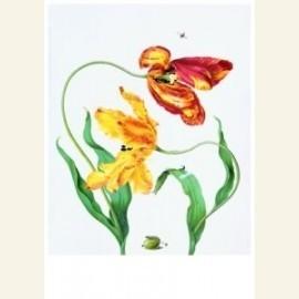 Gekweekte tulpe