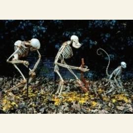 Skeletten, mens, Homo sap