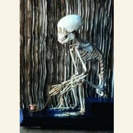 Skelet aapje