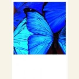 Dagvlinder