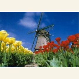 Windmill with Red & Yellow Tulips, Holland