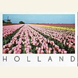 Rose, Yellow & Red tulip fields in Holland